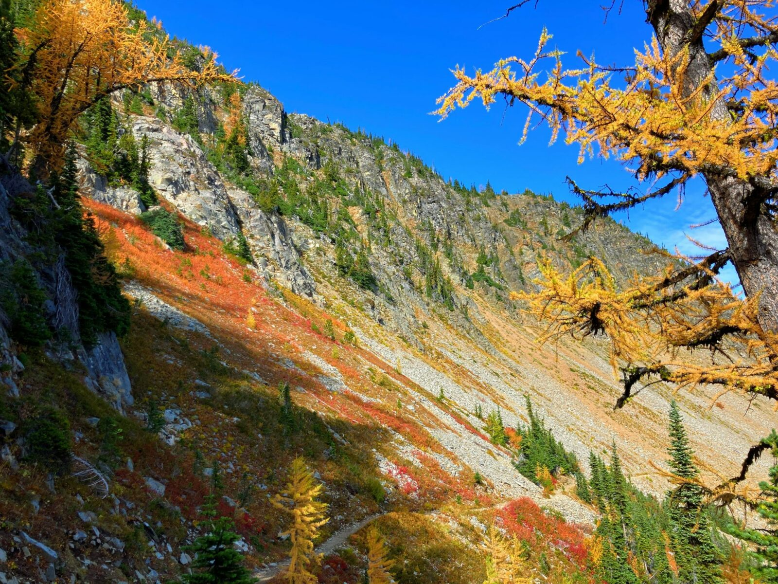 A mountainside with evergreen trees, red berry bushes and golden larches along the Pacific Crest trail on the way to Grasshopper pass