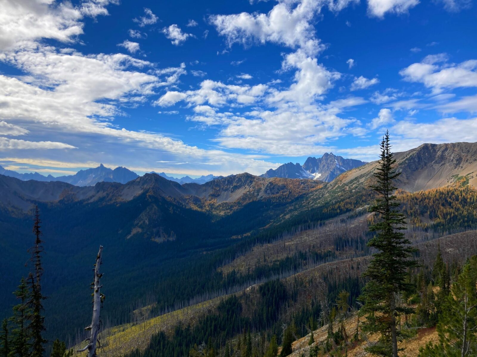 Distant mountains with white clouds against a blue sky. There is a valley in the foreground and evergreen trees and golden larches. Grasshopper Pass is in the distance
