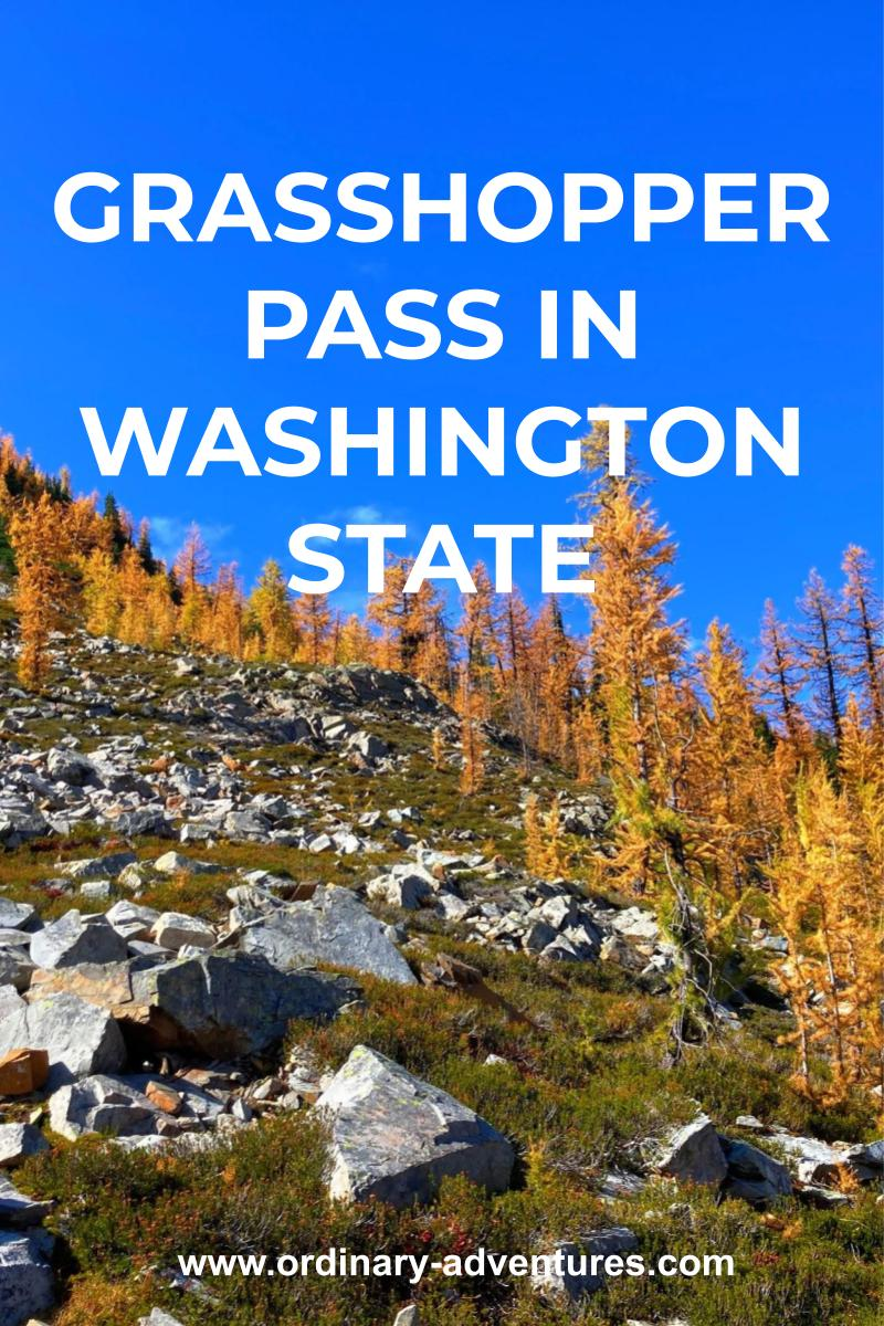 Golden larch trees in fall against a blue sky with rocks in the foreground. Text reads Grasshopper Pass in Washington State