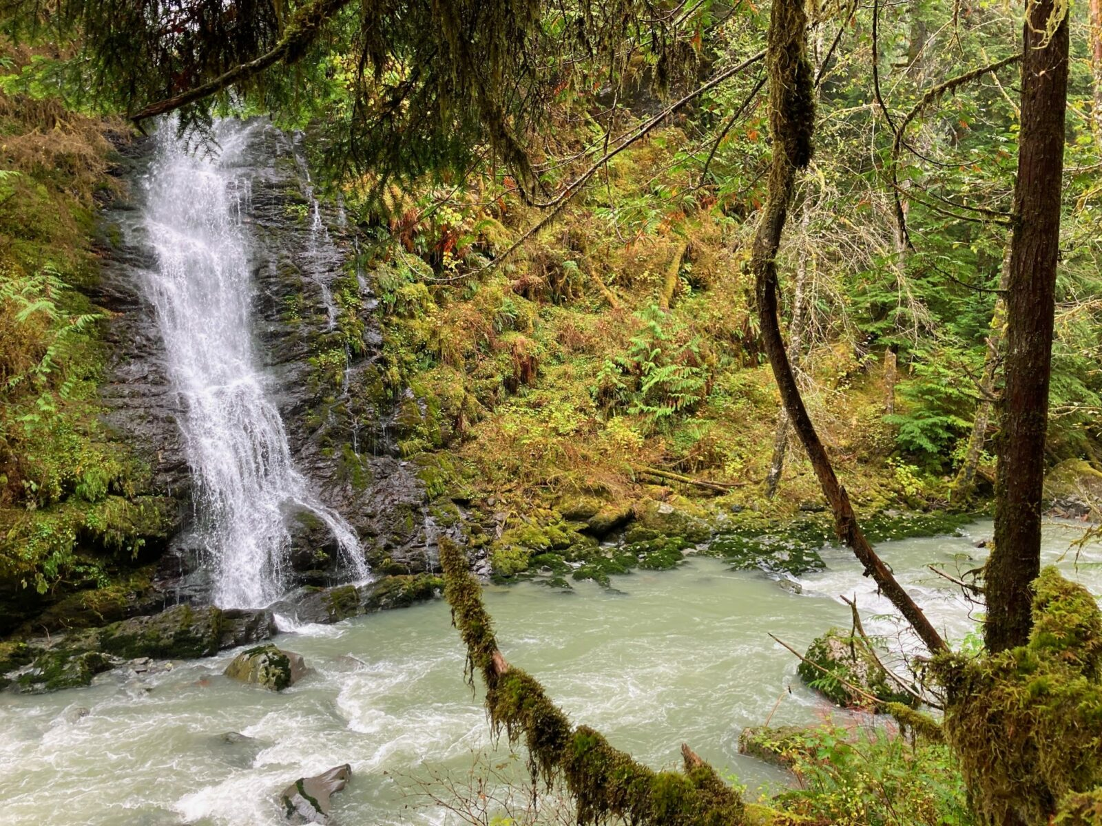 A waterfall coming down between ferns and moss into a rushing milky colored river.