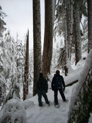 Two hikers with snowshoes, rainjackets and backpacks look up at giant trees along a trail covered in snow in Mt Rainier national Park