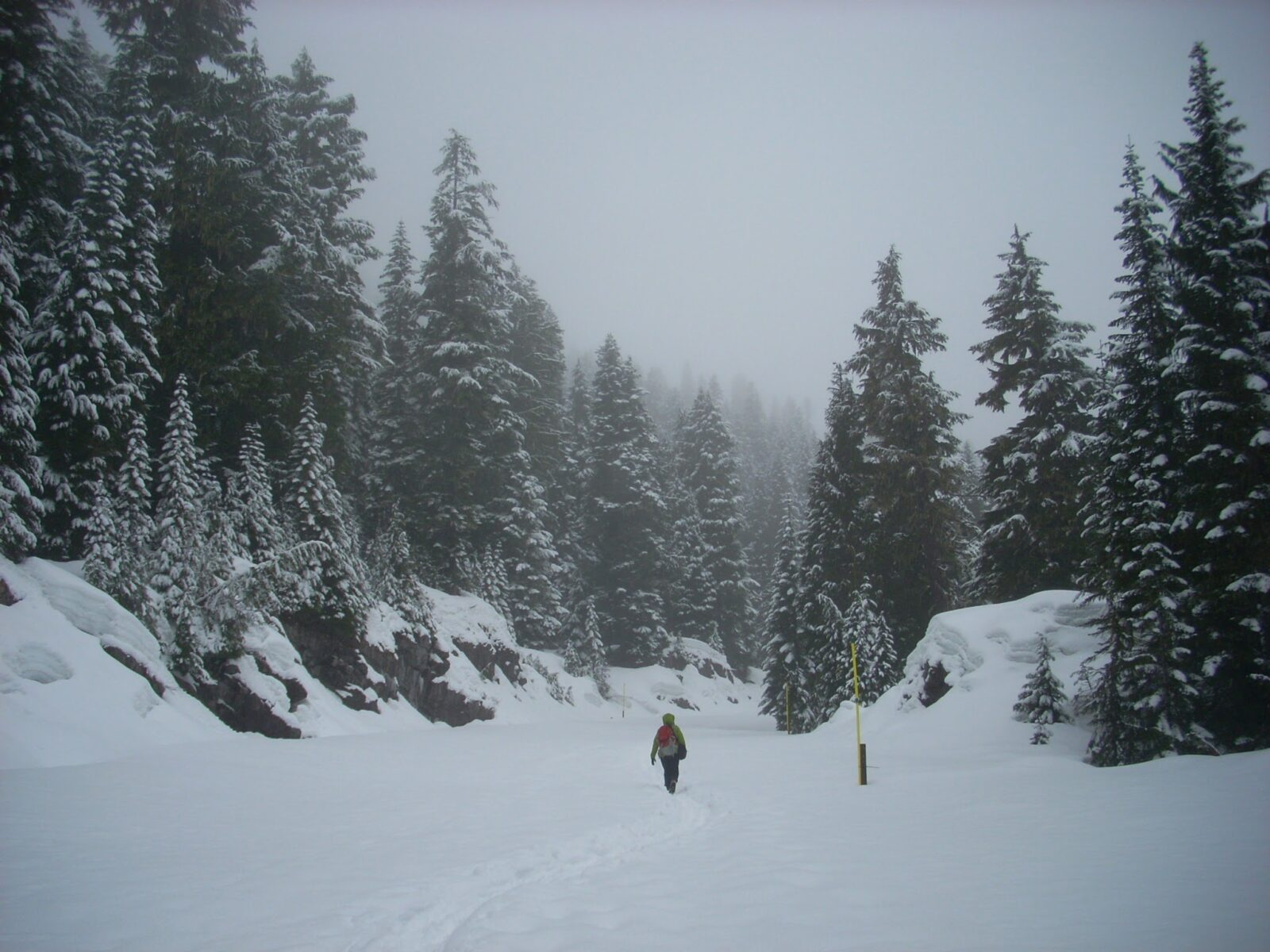A hiker snowshoeing a closed round through a forest of snow covered evergreen trees