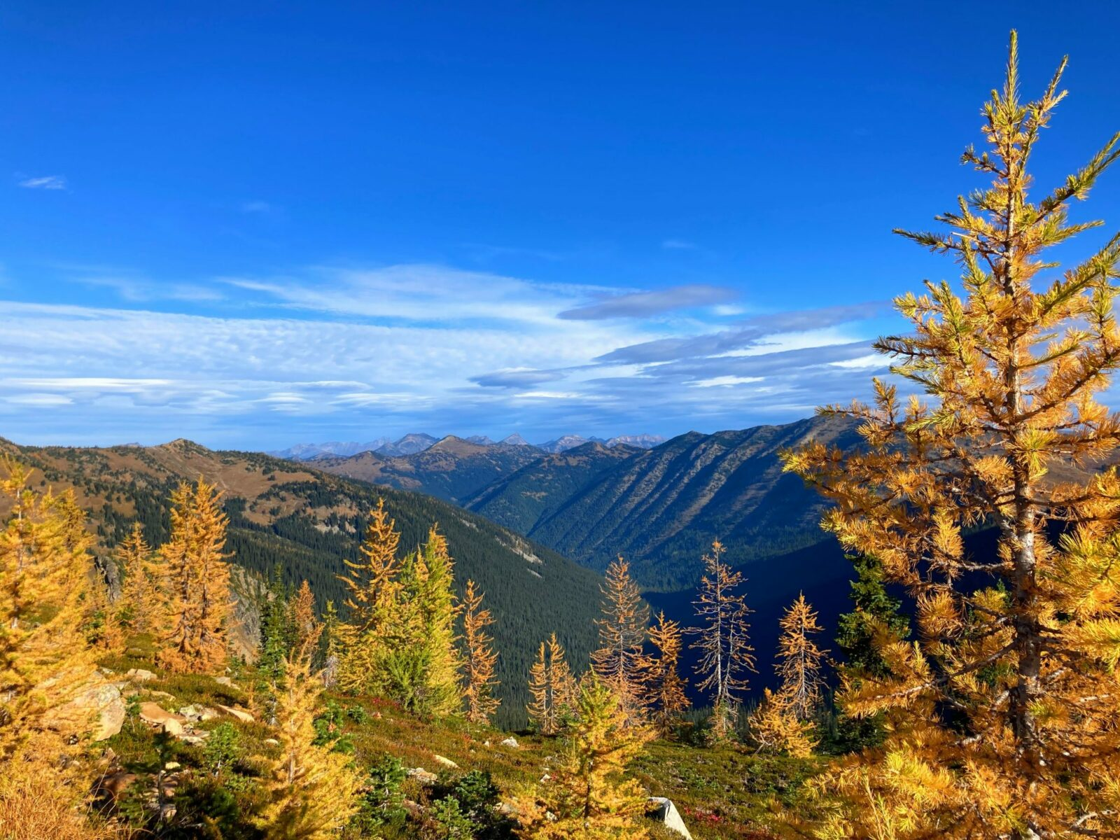Golden larch trees in the foreground against a backdrop of distant mountains against a blue and partly cloudy sky