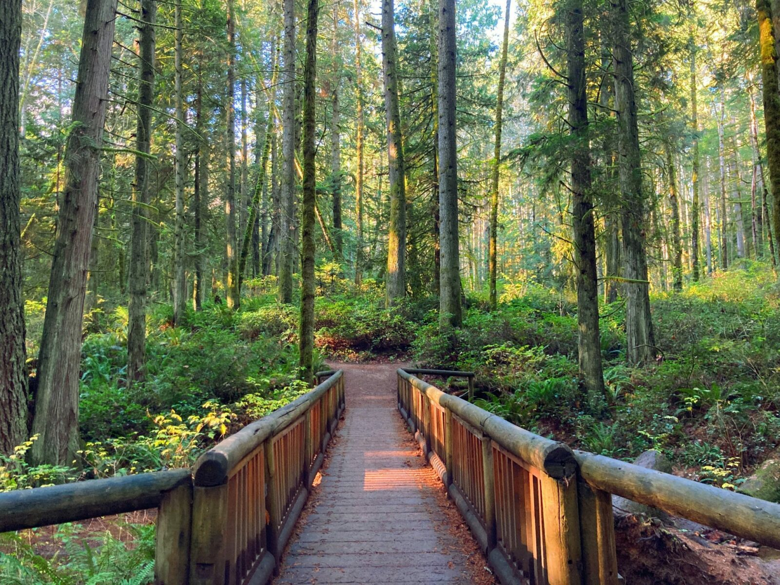Hiking is one of the best things to do on Bainbridge Island. In Grand Forest, there are second growth evergreen trees, undergrowth and a narrow log pedestrian bridge