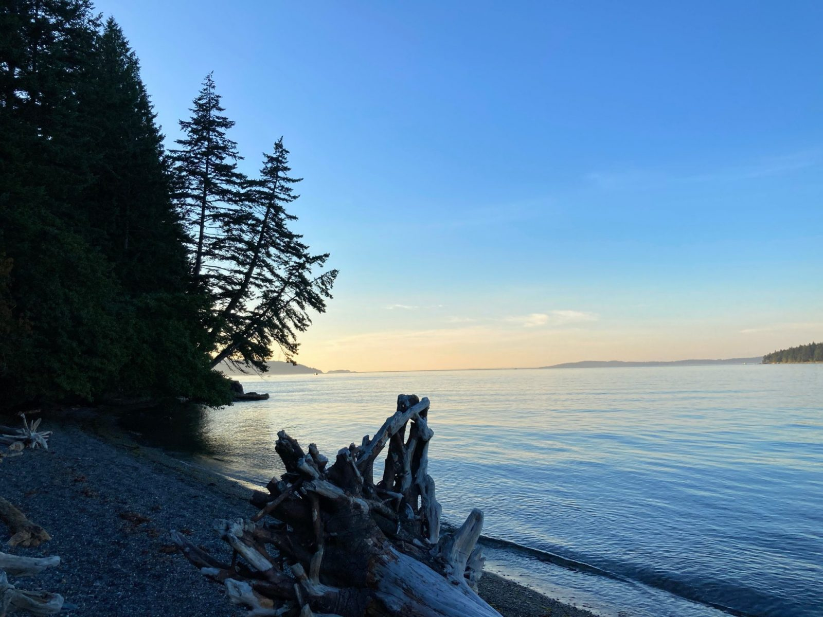 Camping in the san juan islands at Pelican Beach on Cypress Island. The sun has just set behind the trees. Pink light is visible in the sky. Driftwood is in the foreground on a gravel beach