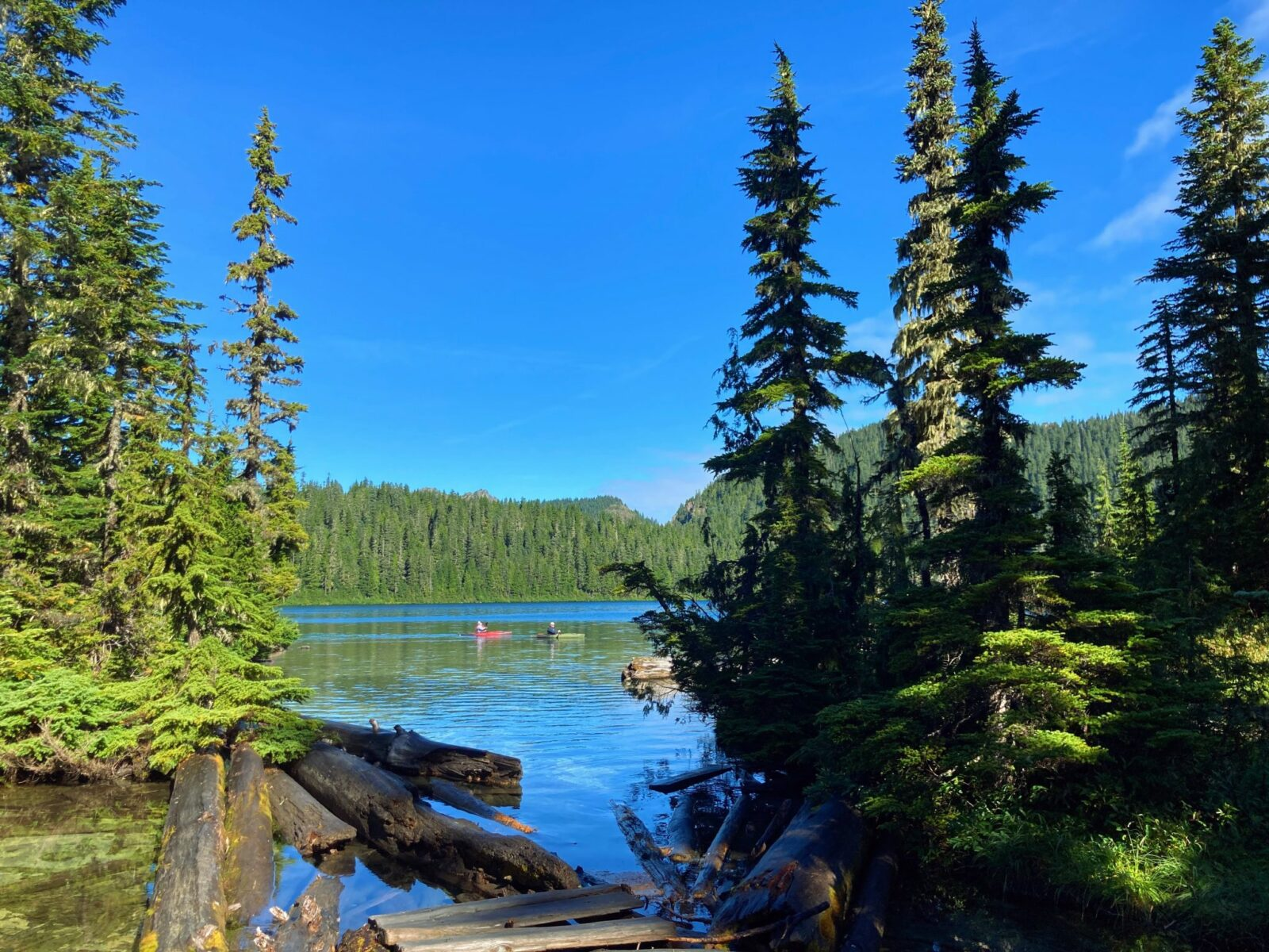 Two kayakers in the distance on Mowich Lake, a remote lake in Mt Rainier National Park. In the distance are forested hillsides and in the foreground are a few logs and some sub alpine firs.