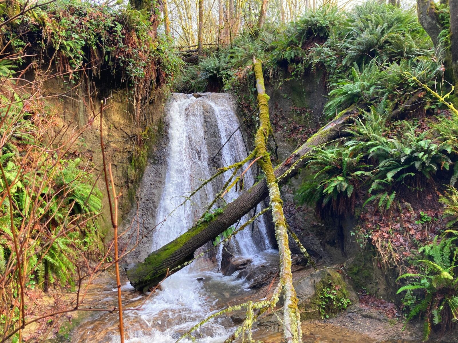 One of the wonderful hikes in Bellevue, the Coal Creek Natural Area includes this waterfall, cascading down a rock face into a small pool among green ferns