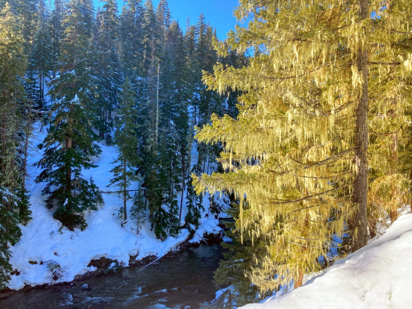 A river below forested hillsides in the winter on a sunny day in the salmon la sac sno park