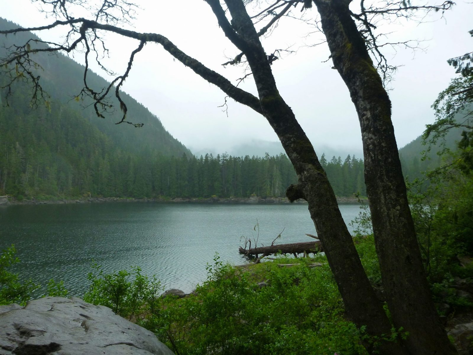An alpine lake on a foggy day surrounded by forested hills