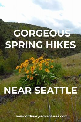 Bright yellow wildflowers with green leaves in a grassy hillside. There are rocky canyon sides in the background. Text reads: Gorgeous spring hikes near seattle