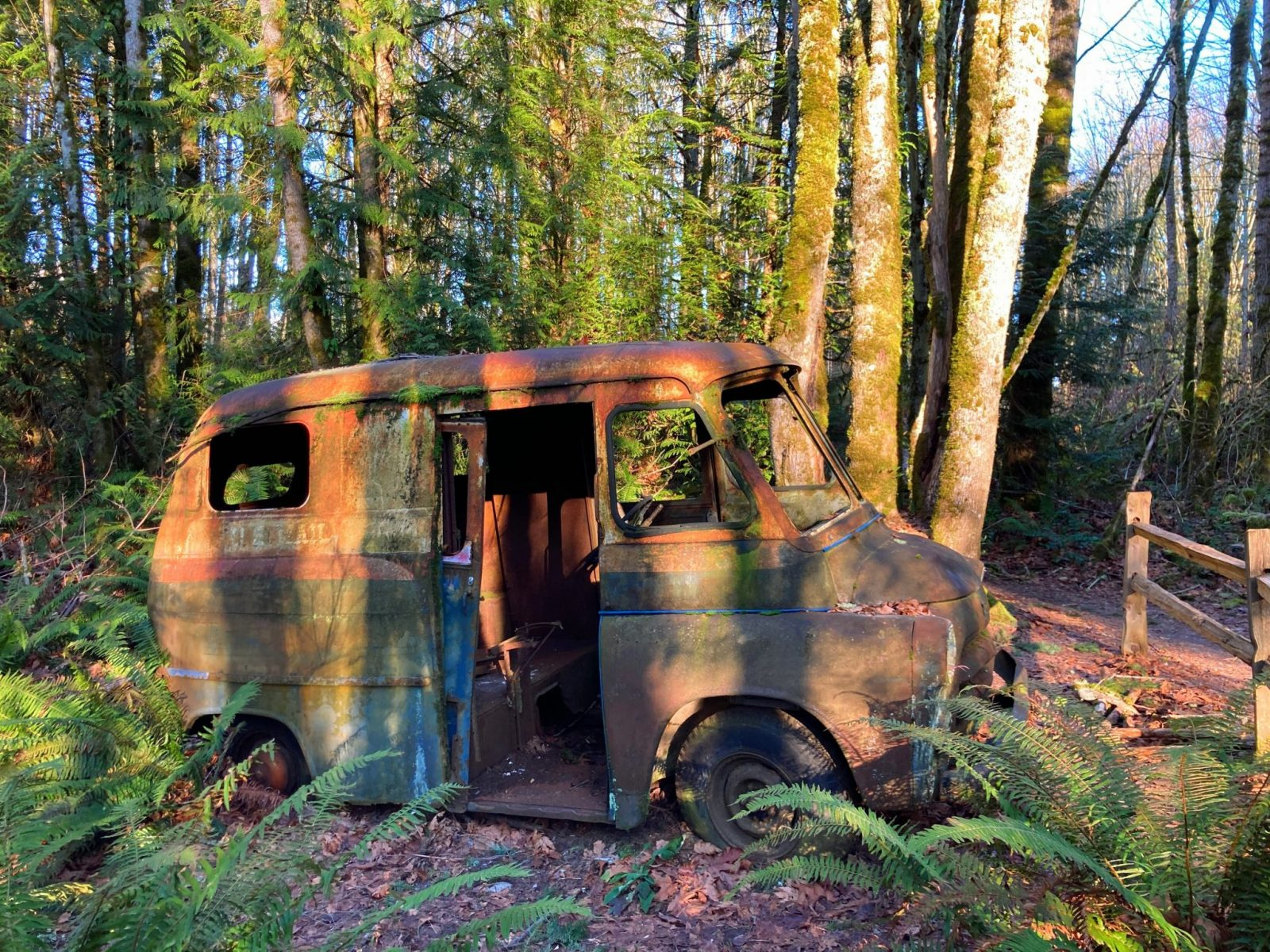 An old, rusty and moss covered truck in the forest. The windows and doors of the truck are gone and it is surrounded by ferns and forest