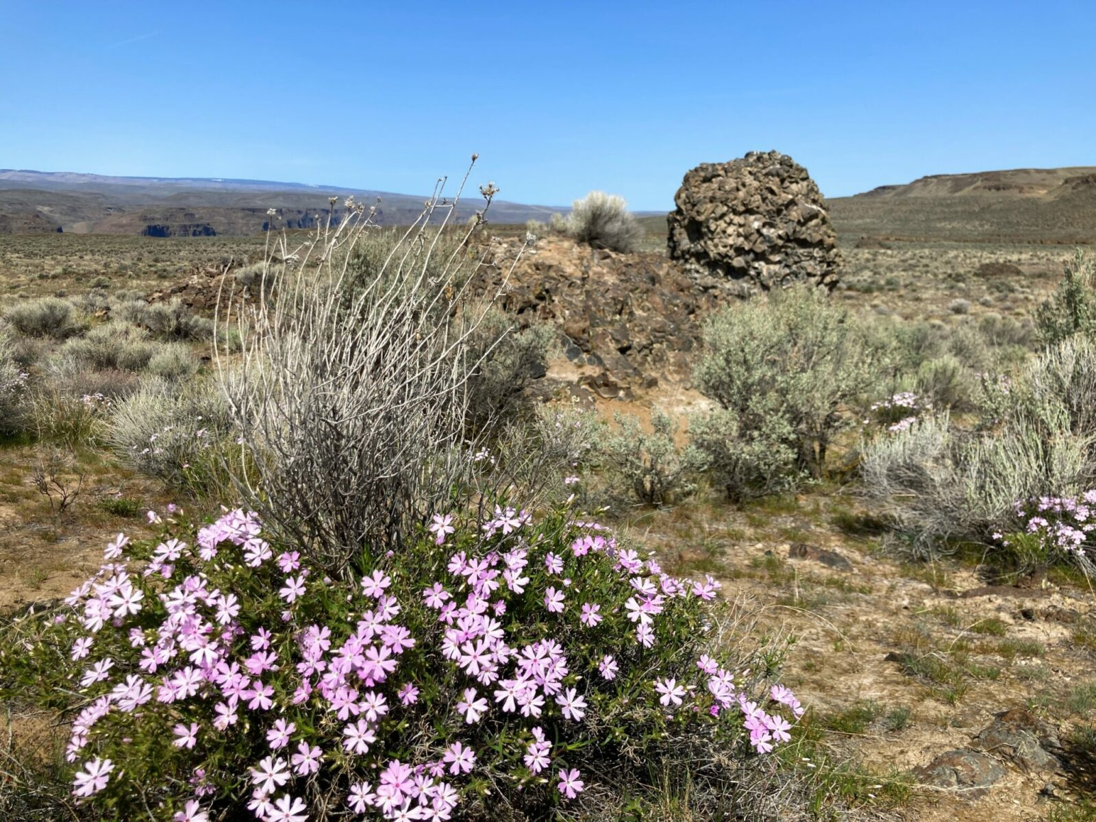 purple wildflowers are in the foreground and a large boulder and distant hills are in the background. There is sagebrush in between the rocks and flowers