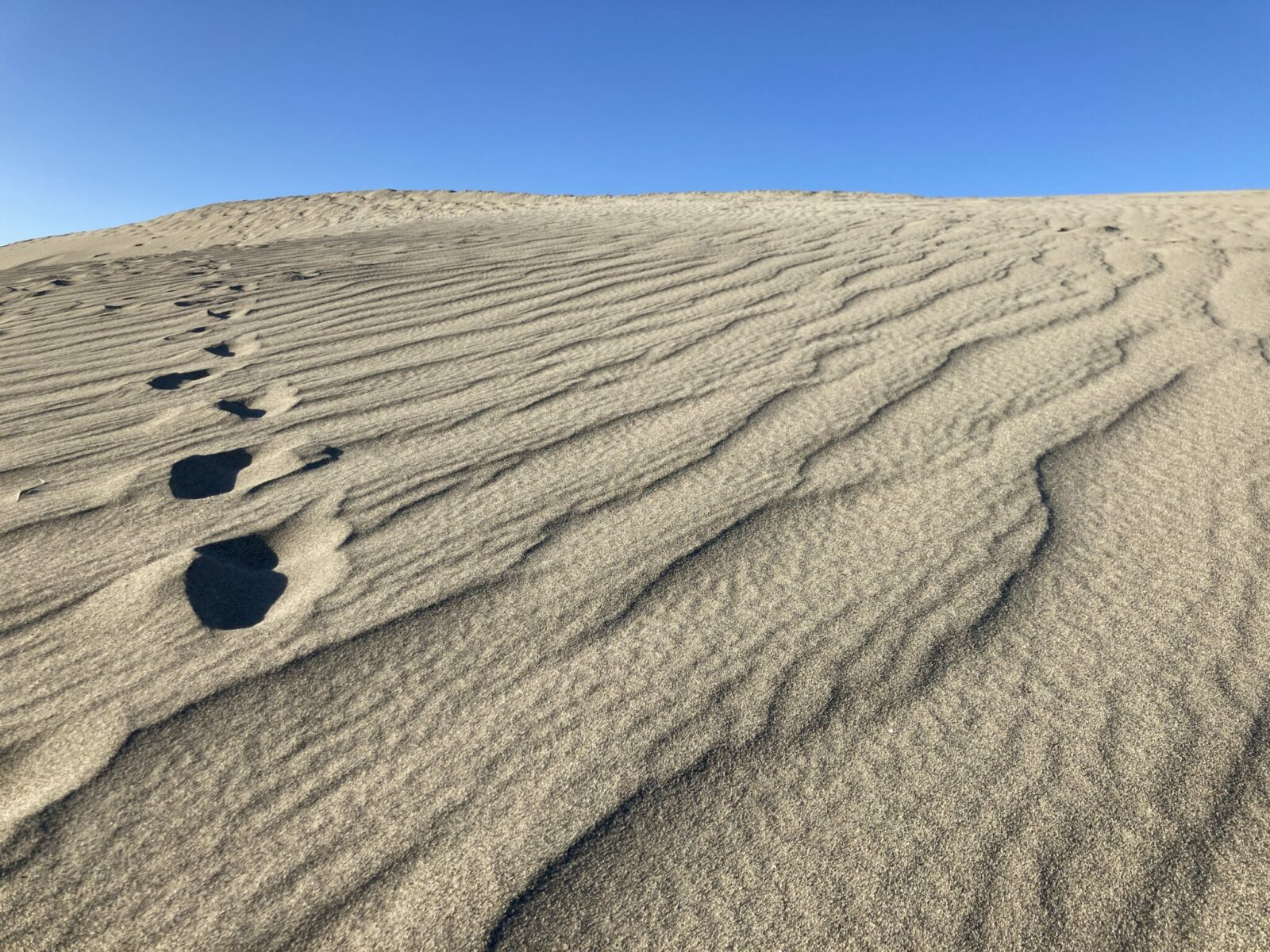A sand dune sticking up into a blue sky with some foot prints going to the top. There is also a wave pattern produced by the wind on the top of the sand